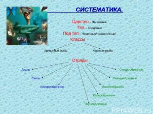 СИСТЕМАТИКА. Царство – Животные Тип – Хордовые Под тип – Черепные/позвоночные/ К