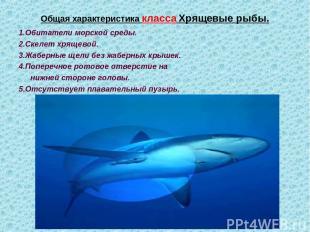 Общая характеристика класса Хрящевые рыбы. 1.Обитатели морской среды. 2.Скелет х