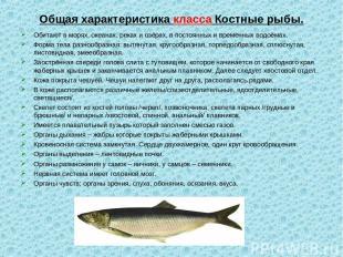 Общая характеристика класса Костные рыбы. Обитают в морях, океанах, реках и озёр