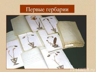 herbLE1.jpg Первые гербарии