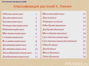 Классификация растений К. Линнея Систематика высших растений Однотычинковые Двух
