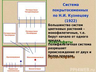 Cистема покрытосеменных по Н.И. Кузнецову (1922) Большинство систем цветковых ра