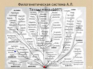 Филогенетическая система А.Л. Тахтаджяна (1987)