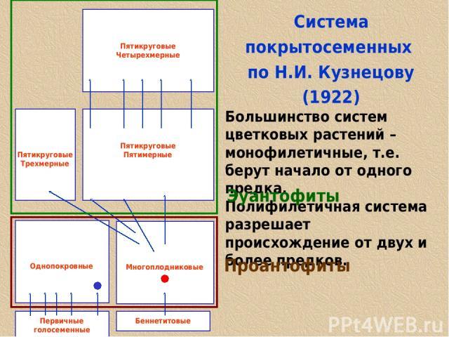 Cистема покрытосеменных по Н.И. Кузнецову (1922) Большинство систем цветковых растений – монофилетичные, т.е. берут начало от одного предка. Полифилетичная система разрешает происхождение от двух и более предков. Однопокровные Многоплодниковые Перви…