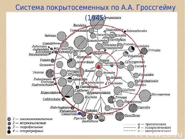 Cистема покрытосеменных по А.А. Гроссгейму (1945)