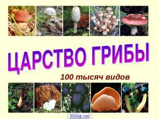 100 тысяч видов 900igr.net