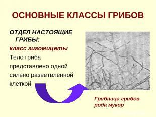 ОСНОВНЫЕ КЛАССЫ ГРИБОВ ОТДЕЛ НАСТОЯЩИЕ ГРИБЫ: класс зигомицеты Тело гриба предст