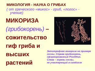 МИКОЛОГИЯ - НАУКА О ГРИБАХ ( от греческого «микос» - гриб, «логос» - учение) МИК