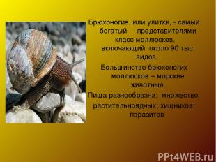 Брюхоногие, или улитки, - самый богатый представителями класс моллюсков, включаю