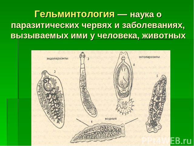 Гельминтология — наука о паразитических червях и заболеваниях, вызываемых ими у человека, животных