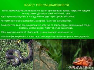 КЛАСС ПРЕСМЫКАЮЩИЕСЯ. ПРЕСМЫКАЮЩИЕСЯ-животные с сухой ороговевшей кожей, покрыто