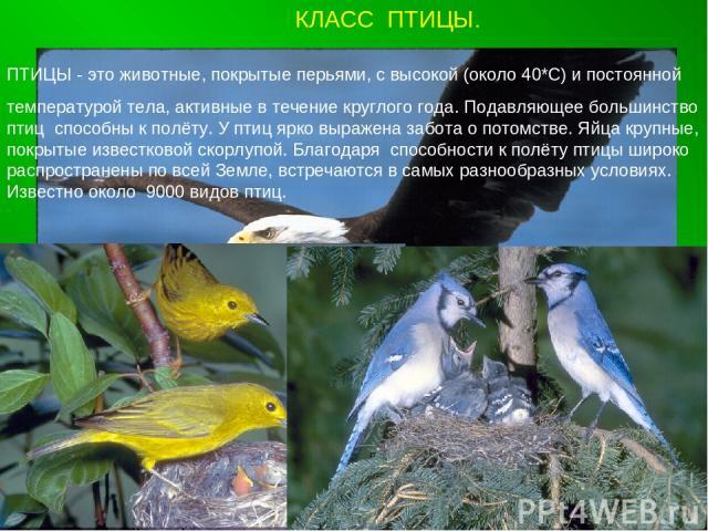 КЛАСС ПТИЦЫ. ПТИЦЫ - это животные, покрытые перьями, с высокой (около 40*С) и постоянной температурой тела, активные в течение круглого года. Подавляющее большинство птиц способны к полёту. У птиц ярко выражена забота о потомстве. Яйца крупные, покр…