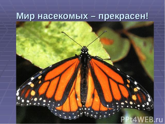 Мир насекомых – прекрасен!