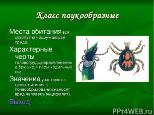 Класс паукообразные Места обитания вся сухопутная окружающая среда. Характерные