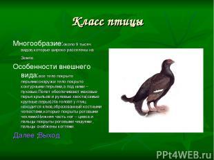 Класс птицы Многообразие:около 9 тысяч видов,которые широко расселены на Земле.
