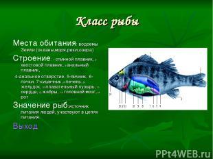 Класс рыбы Места обитания: водоемы Земли (океаны,моря,реки,озера) Строение: 1-сп