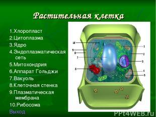 Растительная клетка 1.Хлоропласт 2.Цитоплазма 3.Ядро 4.Эндоплазматическая сеть 5