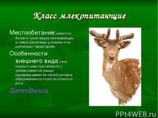 Класс млекопитающие Местообитание:известно более 4 тысяч видов,проживающих в сам