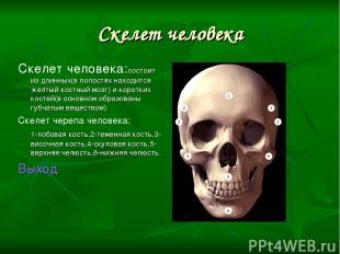 Скелет человека Скелет человека:состоит из длинных(в полостях находится желтый к