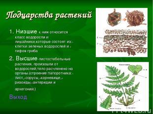 Подцарства растений 1. Низшие к ним относится класс водоросли и лишайники,которы