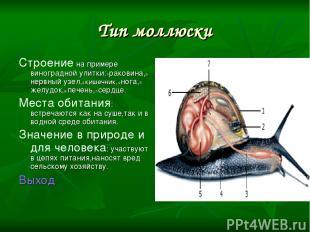 Тип моллюски Строение на примере виноградной улитки:1-раковина,2-нервный узел,3-