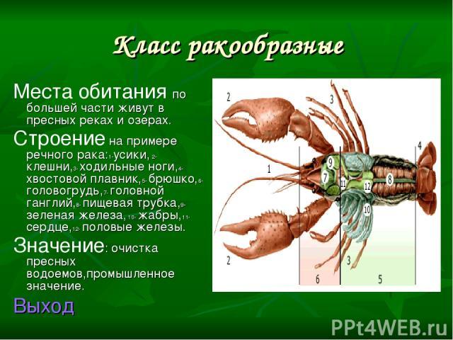 Класс ракообразные Места обитания по большей части живут в пресных реках и озерах. Строение на примере речного рака:1-усики, 2- клешни,3- ходильные ноги,4- хвостовой плавник,5- брюшко,6- головогрудь,7- головной ганглий,8- пищевая трубка,9-зеленая же…