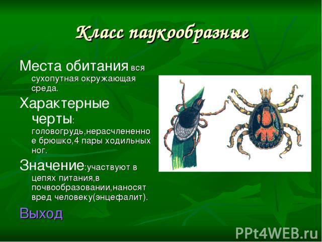 Класс паукообразные Места обитания вся сухопутная окружающая среда. Характерные черты: головогрудь,нерасчлененное брюшко,4 пары ходильных ног. Значение:участвуют в цепях питания,в почвообразовании,наносят вред человеку(энцефалит). Выход