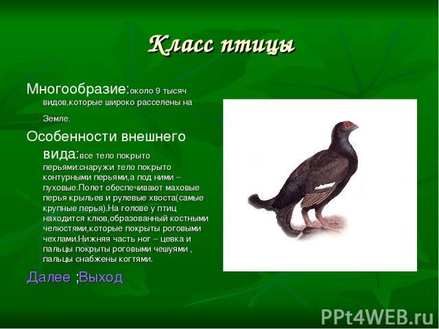 Класс птицы Многообразие:около 9 тысяч видов,которые широко расселены на Земле. Особенности внешнего вида:все тело покрыто перьями:снаружи тело покрыто контурными перьями,а под ними – пуховые.Полет обеспечивают маховые перья крыльев и рулевые хвоста…