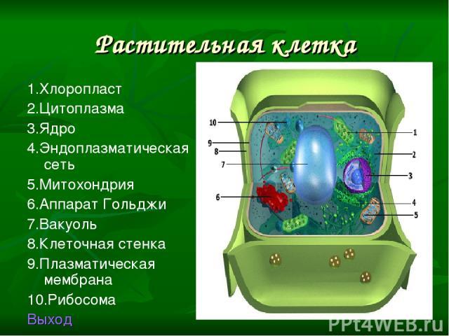 Растительная клетка 1.Хлоропласт 2.Цитоплазма 3.Ядро 4.Эндоплазматическая сеть 5.Митохондрия 6.Аппарат Гольджи 7.Вакуоль 8.Клеточная стенка 9.Плазматическая мембрана 10.Рибосома Выход