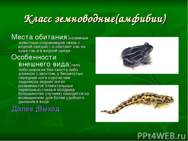 Класс земноводные(амфибии) Места обитания:наземные животные,сохранившие связь с водной средой,т.е.обитают как на суше,так и в водной среде. Особенности внешнего вида:тело либо широкое без хвоста,либо длинное с хвостом; у бесхвостых передние ноги кор…