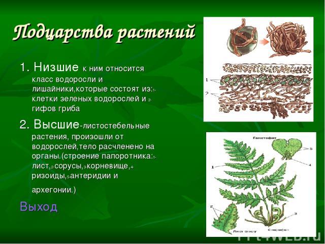 Подцарства растений 1. Низшие к ним относится класс водоросли и лишайники,которые состоят из:1-клетки зеленых водорослей и 2-гифов гриба 2. Высшие-листостебельные растения, произошли от водорослей,тело расчленено на органы.(строение папоротника:1-ли…