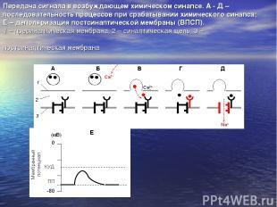 Передача сигнала в возбуждающем химическом синапсе. А - Д – последовательность п