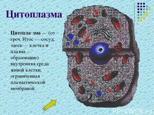 Цитоплазма Цитопла зма— (от греч. Итос— сосуд, здесь— клетка и плазма— образ
