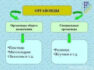 ОРГАНОИДЫ Органоиды общего назначения Специальные органоиды Пластиды Митохондрии