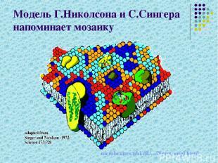 Модель Г.Николсона и С.Сингера напоминает мозаику membranes.nbi.dk/.../News_engl