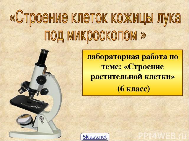 лабораторная работа по теме: «Строение растительной клетки» (6 класс) 5klass.net