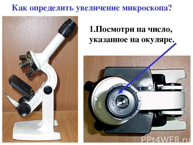 Как определить увеличение микроскопа? 1.Посмотри на число, указанное на окуляре.