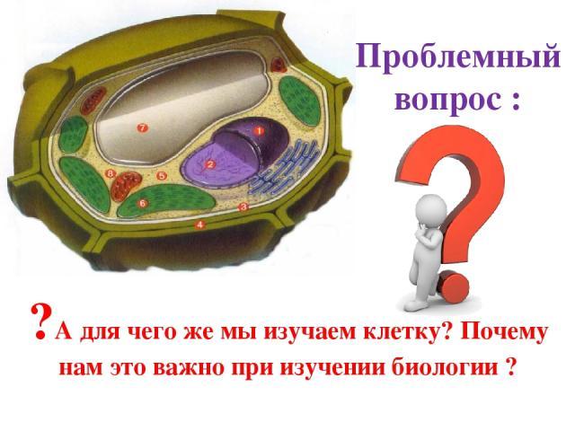 Проблемный вопрос : ?А для чего же мы изучаем клетку? Почему нам это важно при изучении биологии ?