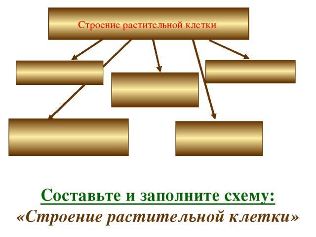 Строение растительной клетки Составьте и заполните схему: «Строение растительной клетки»