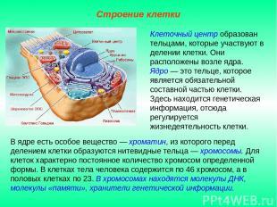 В ядре есть особое вещество — хроматин, из которого перед делением клетки образу