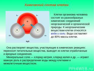Она растворяет вещества, участвующие в химических реакциях: переносит питательны