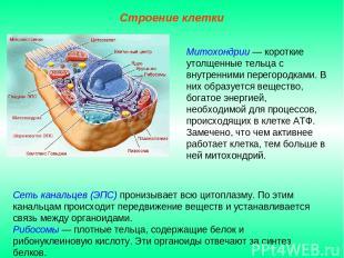 Сеть канальцев (ЭПС) пронизывает всю цитоплазму. По этим канальцам происходит пе