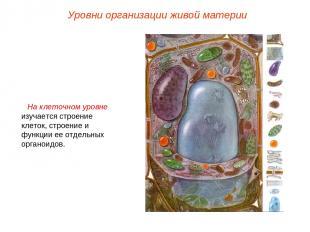 На клеточном уровне изучается строение клеток, строение и функции ее отдельных о