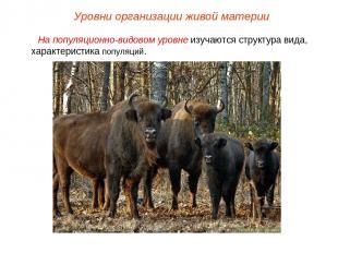 На популяционно-видовом уровне изучаются структура вида, характеристика популяци