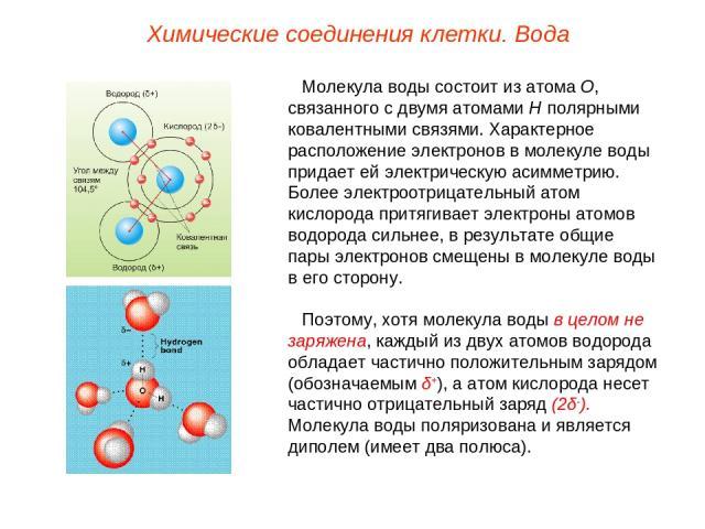 Молекула воды состоит из атома О, связанного с двумя атомами Н полярными ковалентными связями. Характерное расположение электронов в молекуле воды придает ей электрическую асимметрию. Более электроотрицательный атом кислорода притягивает электроны а…