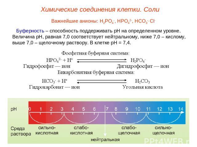 Важнейшие анионы: Н2РО4-, НРО42-, НСО3-, Сl- Буферность – способность поддерживать рН на определенном уровне. Величина рН, равная 7,0 соответствует нейтральному, ниже 7,0 – кислому, выше 7,0 – щелочному раствору. В клетке рН = 7,4. Химические соедин…