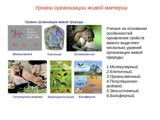 Ученые на основании особенностей проявления свойств живого выделяют несколько уровней организации живой природы: Молекулярный. Клеточный. Организменный. Популяционно-видовой. Экосистемный. Биосферный. Уровни организации живой материи
