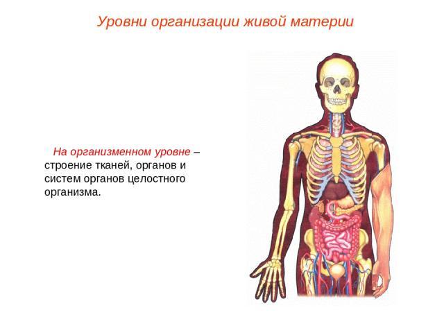 На организменном уровне – строение тканей, органов и систем органов целостного организма. Уровни организации живой материи