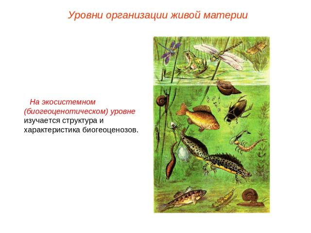 На экосистемном (биогеоценотическом) уровне изучается структура и характеристика биогеоценозов. Уровни организации живой материи