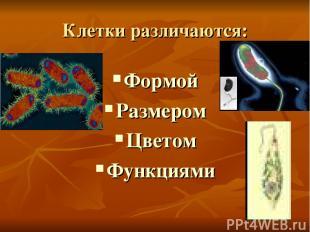Клетки различаются: Формой Размером Цветом Функциями